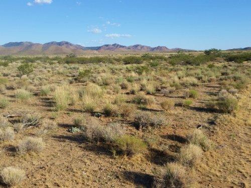 Serene Desert Beauty Awaits : Dolan Springs : Mohave County : Arizona