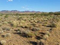Serene Desert Beauty Awaits