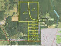 Parcel 5 Oak Creek 12 Acres : Starke : Bradford County : Florida