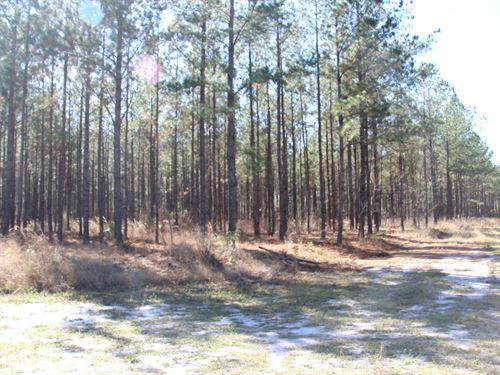 Parcel 7 Oak Creek 12 Acres : Starke : Bradford County : Florida