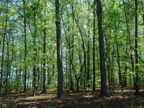 Nice Wooded Homesites : Honea Path : Greenville County : South Carolina