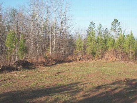 9 Acre Minifarm/Homesite - Lot 15 : Alexander City : Tallapoosa County : Alabama