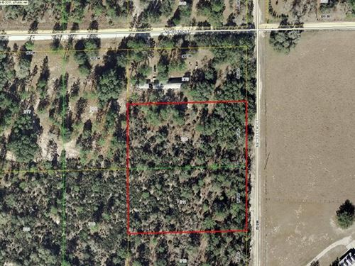 Vacant Wooded Lots 773024 : Archer : Levy County : Florida