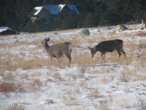 236499, Abundant Wildlife Viewing : Buena Vista : Chaffee County : Colorado