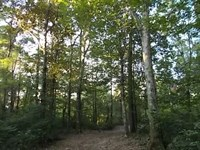 10 Acres On Magee's Creek : Tylertown : Walthall County : Mississippi