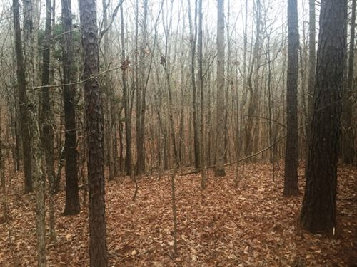 Land For Sale-Neely Rd, Maben, Ms : Maben : Oktibbeha County : Mississippi