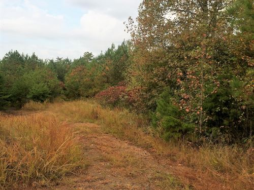 Moss Road - 14.81 Acres : Fairmount : Pickens County : Georgia