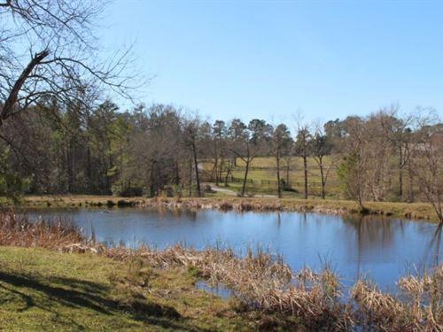 Bethel Springs 10 : Montgomery County : Texas