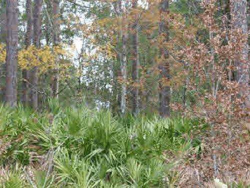Owner Finance Vacant Lot In Putnam : Satsuma : Putnam County : Florida