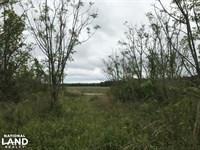 Oak Grove Lots : Effingham : Florence County : South Carolina