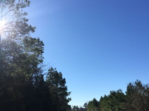7 Acres Ray Marsh Road : Livingston : Polk County : Texas