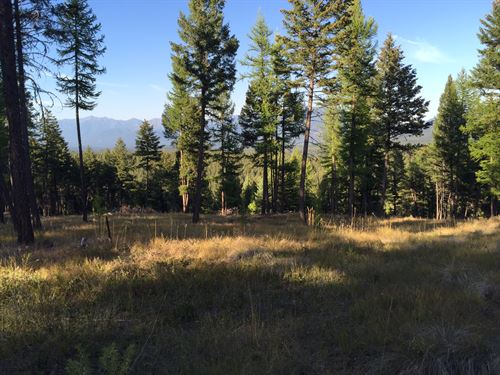 Meadows And Trees, Please. : Fortine : Lincoln County : Montana