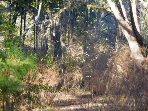 5 Acre Tract West Of Lake City : Wellborn : Suwannee County : Florida