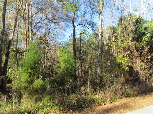 .5 Acre Lot 773184 : Otter Creek : Levy County : Florida