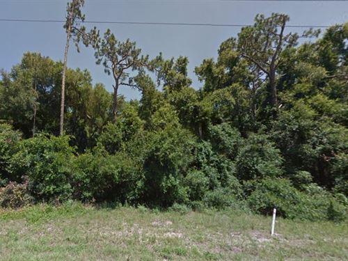 .19 Acre In Summerfield, Fl : Summerfield : Marion County : Florida