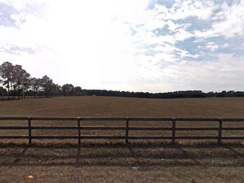 .2 Acre In Summerfield, Fl : Summerfield : Marion County : Florida