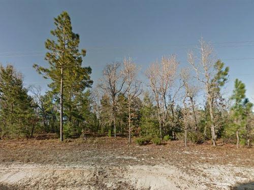 .56 Acre In Interlachen, Fl : Interlachen : Putnam County : Florida