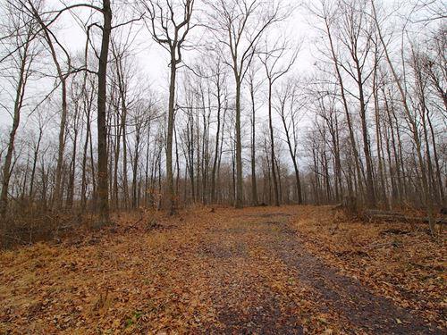 Tr 79 - 12 Acres : Millersburg : Holmes County : Ohio