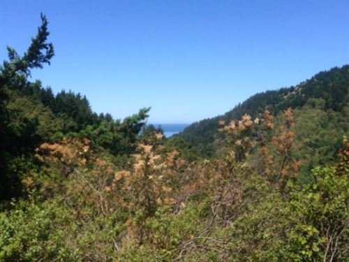 .3 Acres In Shelter Cove, CA : Shelter Cove : Humboldt County : California