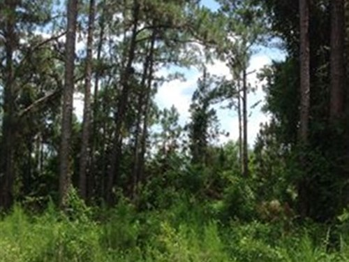 Native Florida Recreational Land : Webster : Sumter County : Florida