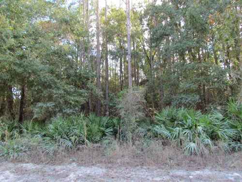 2 Wooded Lots - 9.69 Acres 772907 : Old Town : Dixie County : Florida