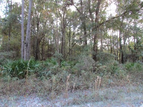 Nice Wooded Lot 4.84 Acres 772906 : Old Town : Dixie County : Florida