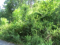 Glendale Lane Lot 124 : Easley : Pickens County : South Carolina