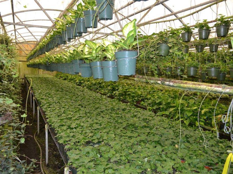Round Lake Road Foliage Nursery : Apopka : Orange County : Florida