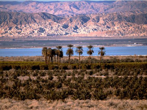 1.25 Acres In Calipatria, CA : Calipatria : Imperial County : California