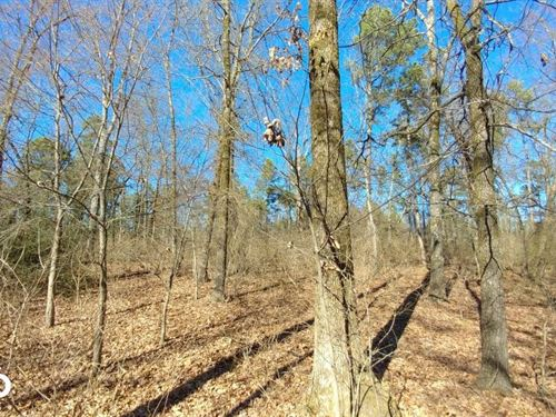 Wye Mountain Residential, Pasture, : Wye : Pulaski County : Arkansas