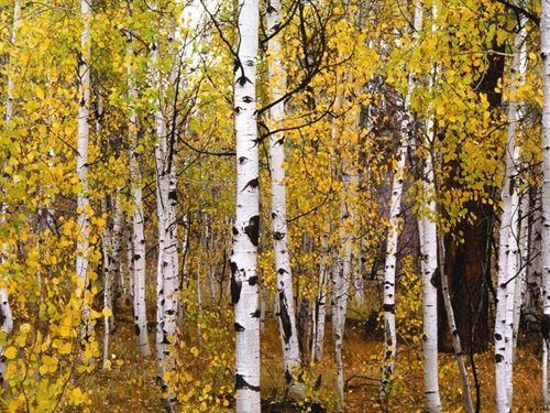 Reserve At Pagosa Peak Lot 90 : Pagosa Springs : Archuleta County : Colorado