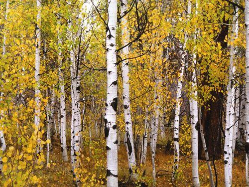 Reserve At Pagosa Peak, Lot 91 : Pagosa Springs : Archuleta County : Colorado