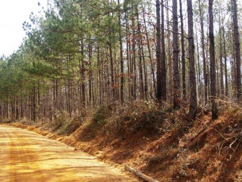 Land For Sale Gillsburg Ms Communit : Magnolia : Amite County : Mississippi