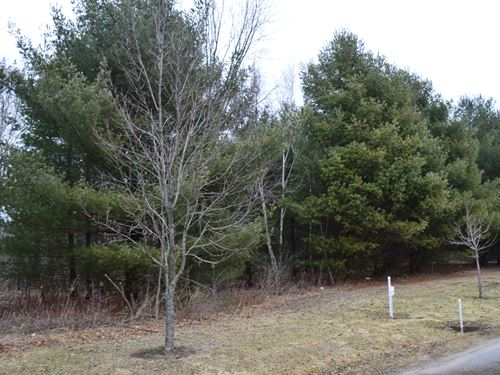 Lot 42 Buildable Rural Country Lot : Oxford : Marquette County : Wisconsin