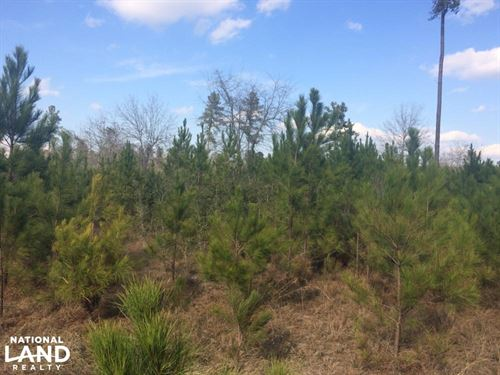Fort Stewart Timber Property OR Hom : Glennville : Long County : Georgia