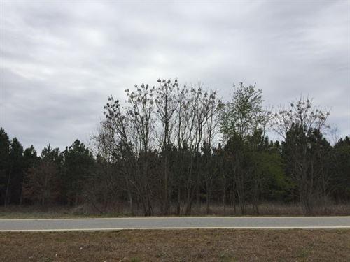 Beautiful Home Site On 6 Acres : Elko : Houston County : Georgia