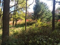 Private Lot With Beautiful Woods : Brooklyn : Dane County : Wisconsin