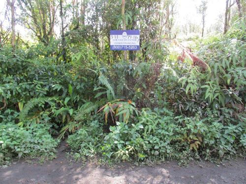 1 Acre On Electric, Owner Financing : Mountain View : Hawaii County : Hawaii