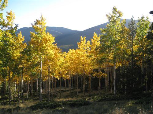 Forbes Park Ranch Aspen Acres : Fort Garland : Costilla County : Colorado