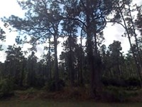 Polk County, Florida $19,500 : Indian Lake Estates : Polk County : Florida