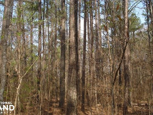 Hosmer Road Homesite : Brookwood : Tuscaloosa County : Alabama