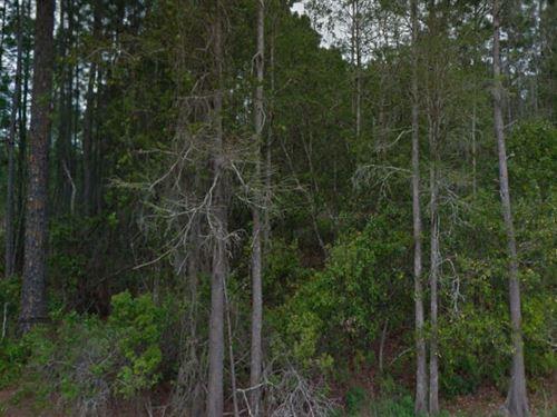 Polk County, Florida $13,500 Neg : Polk City : Polk County : Florida