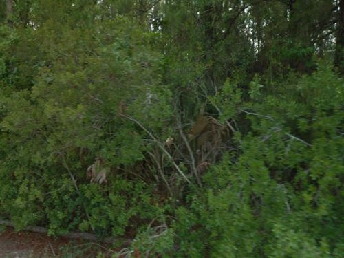 Flagler County, Fl $32,000 Neg. : Palm Coast : Flagler County : Florida