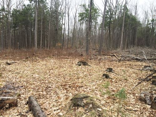 11 Acres Ellicottville Ny Hunting : Humphrey : Cattaraugus County : New York