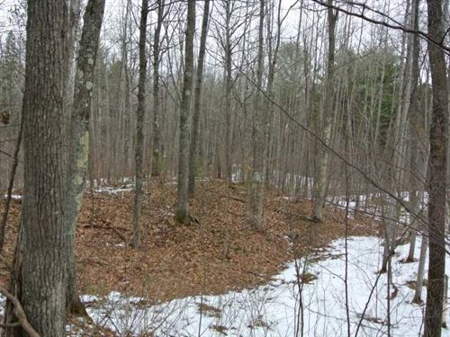 10 Wooded Acres : Lac Du Flambeau : Vilas County : Wisconsin