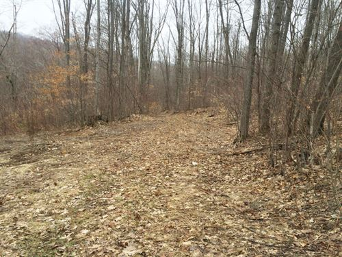 14 Acres Olean Ny Great Hunting : Humphrey : Cattaraugus County : New York