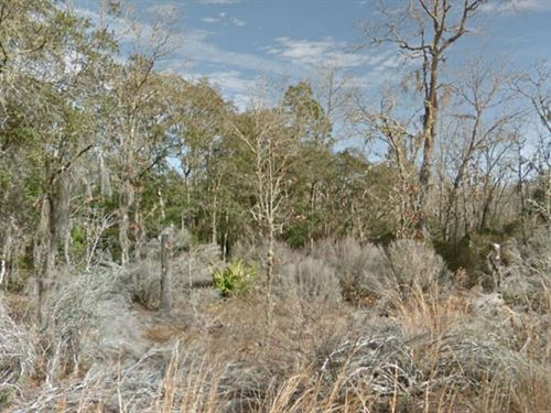 Levy County, Florida $15,500 : Bronson : Levy County : Florida