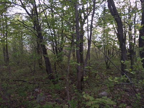 Beaver Meadow Forest : Redfield : Oswego County : New York