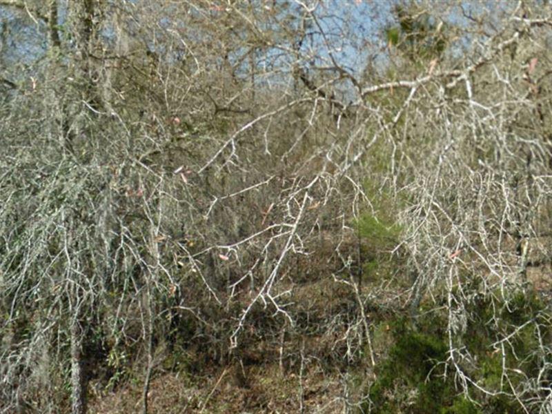 Levy County, Florida - $9,500 Neg : Williston : Levy County : Florida