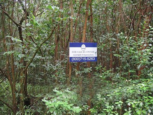 Land Close To Hilo, Owner Financing : Pahoa : Hawaii County : Hawaii